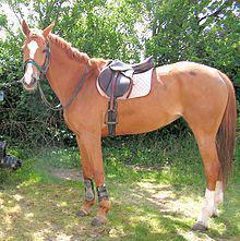 une selle de cheval